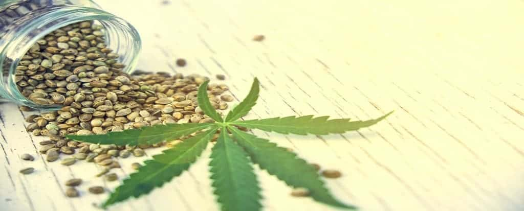 hemp leaves on wooden background, seeds, cannabis oil extracts jars
